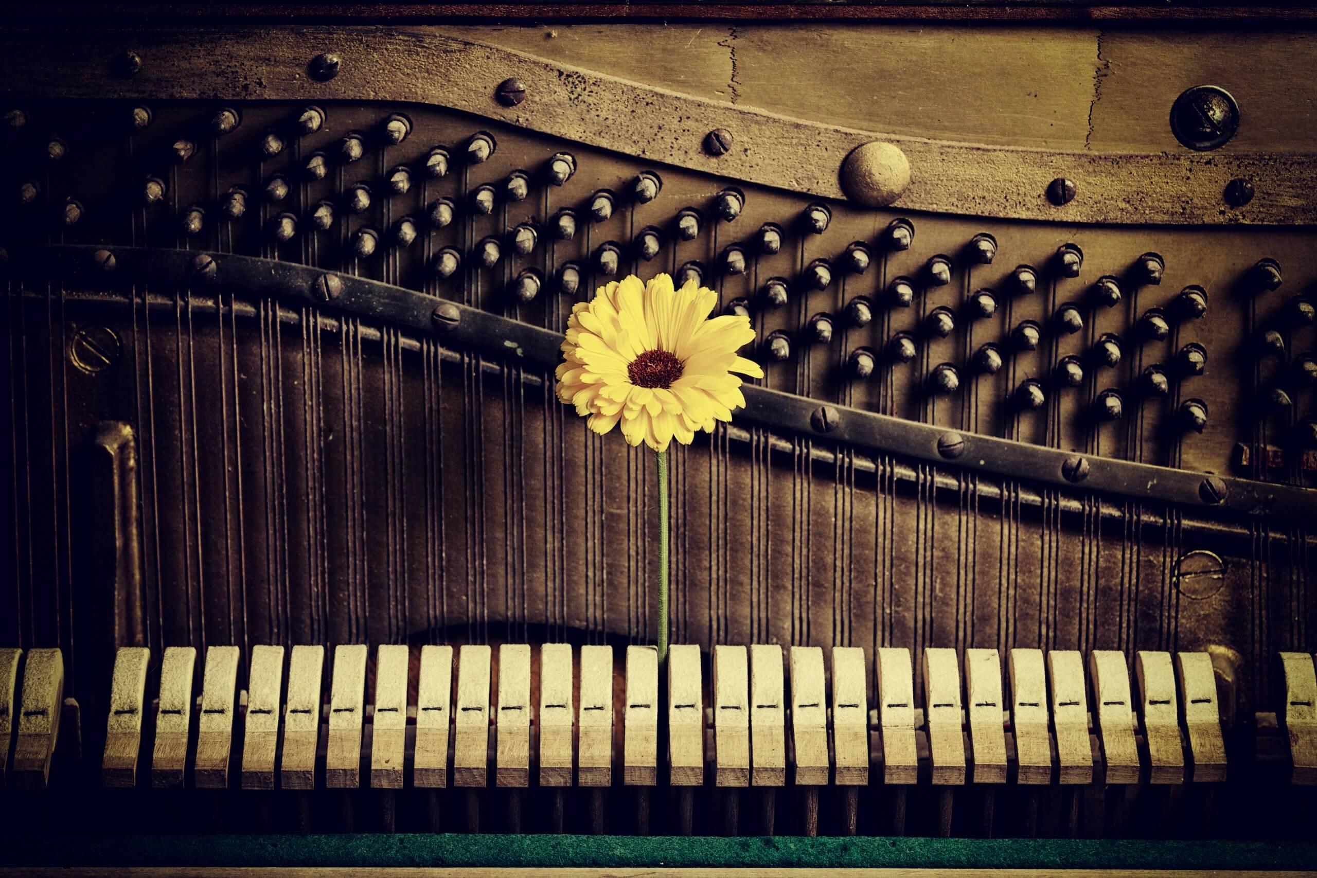 Symbolbild: Innenleben eines Klaviers mit Blume
